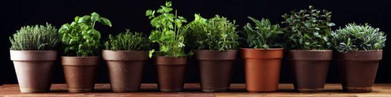 Doniczki na zioła