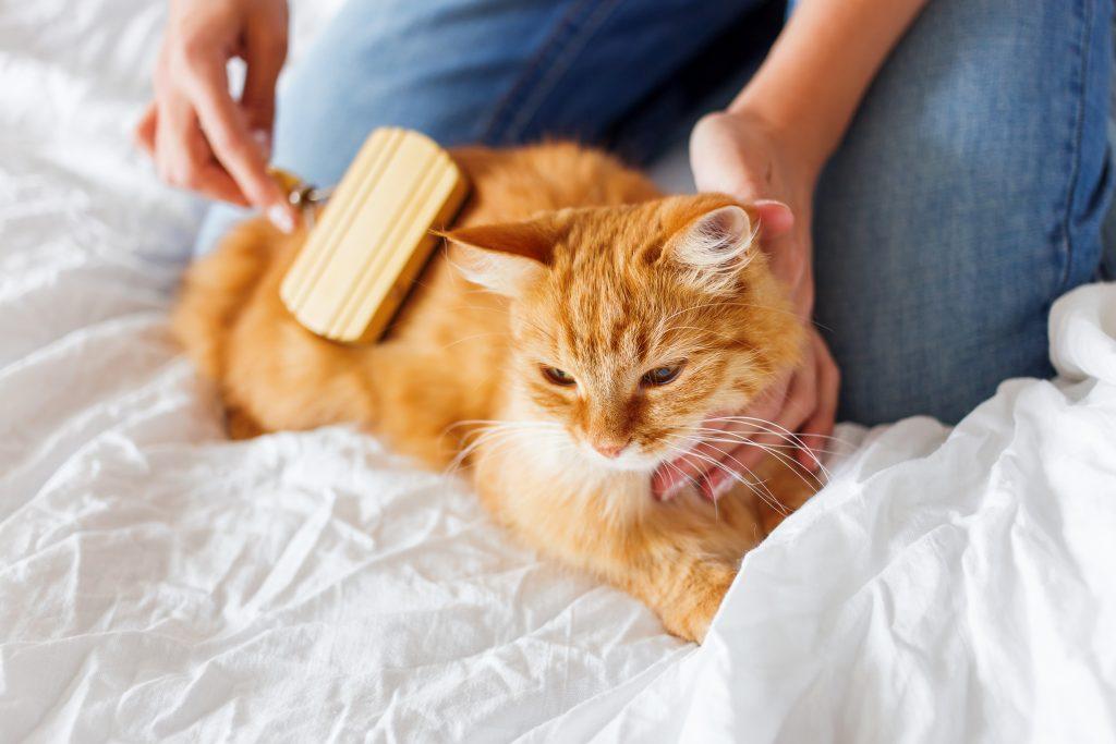 Szczotka dla kota