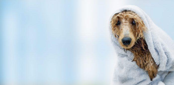 Kąpanie psa