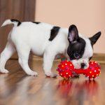 Zabawka dla psa