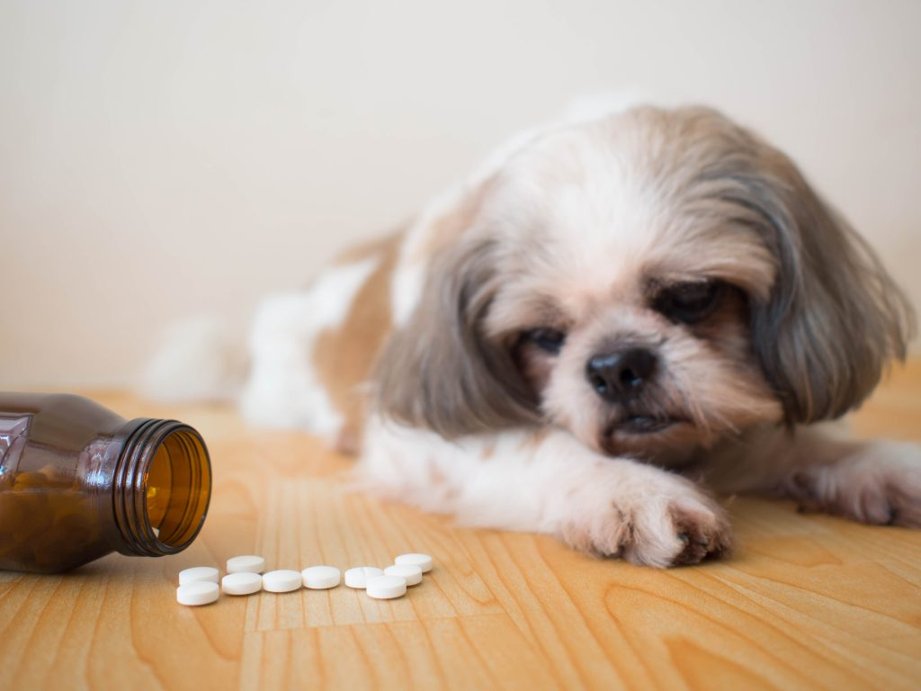 Suplementy diety dla psa