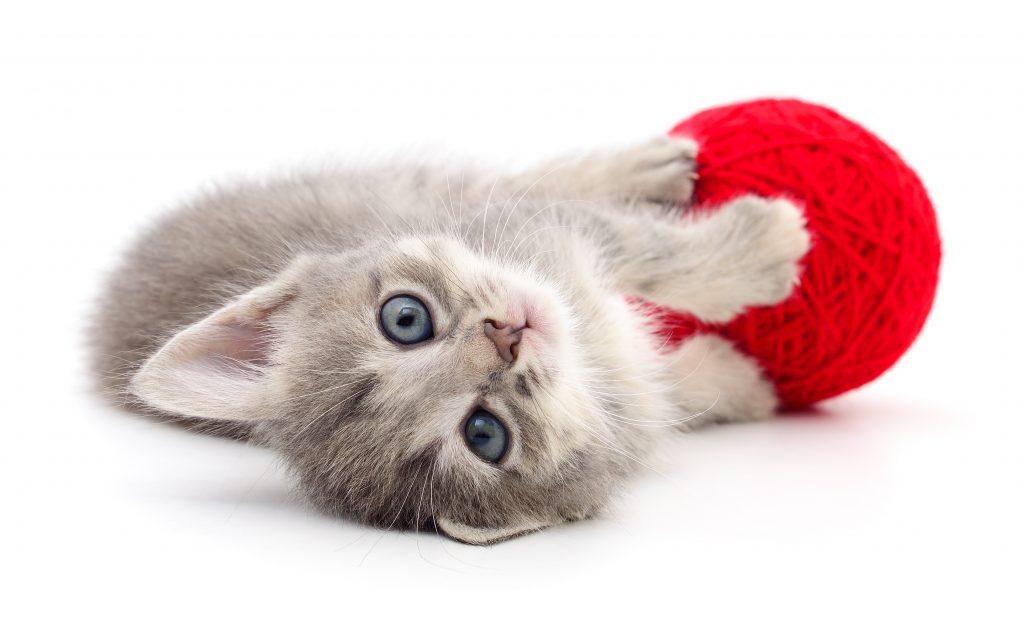 Zabawka dla kota