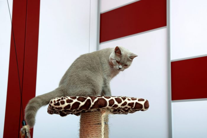 Drapak dla kota