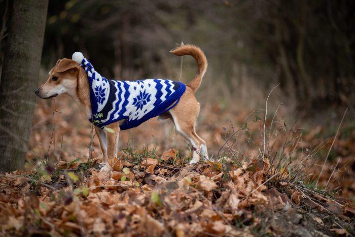 Ubranko dla psa