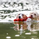 Zabawki dla psa do wody