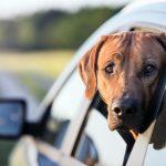 Podróż z psem
