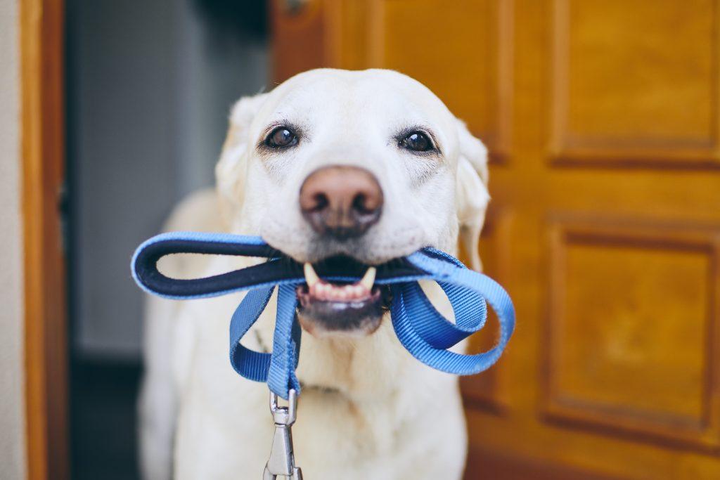 Smycz dla psa