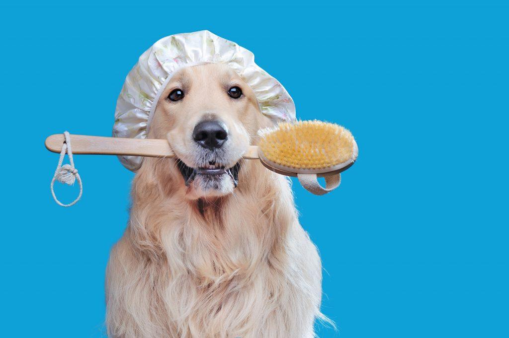Szczotka dla psa