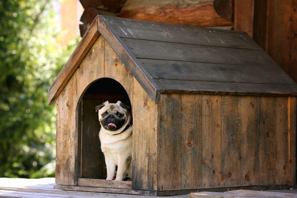 Buda dla psa