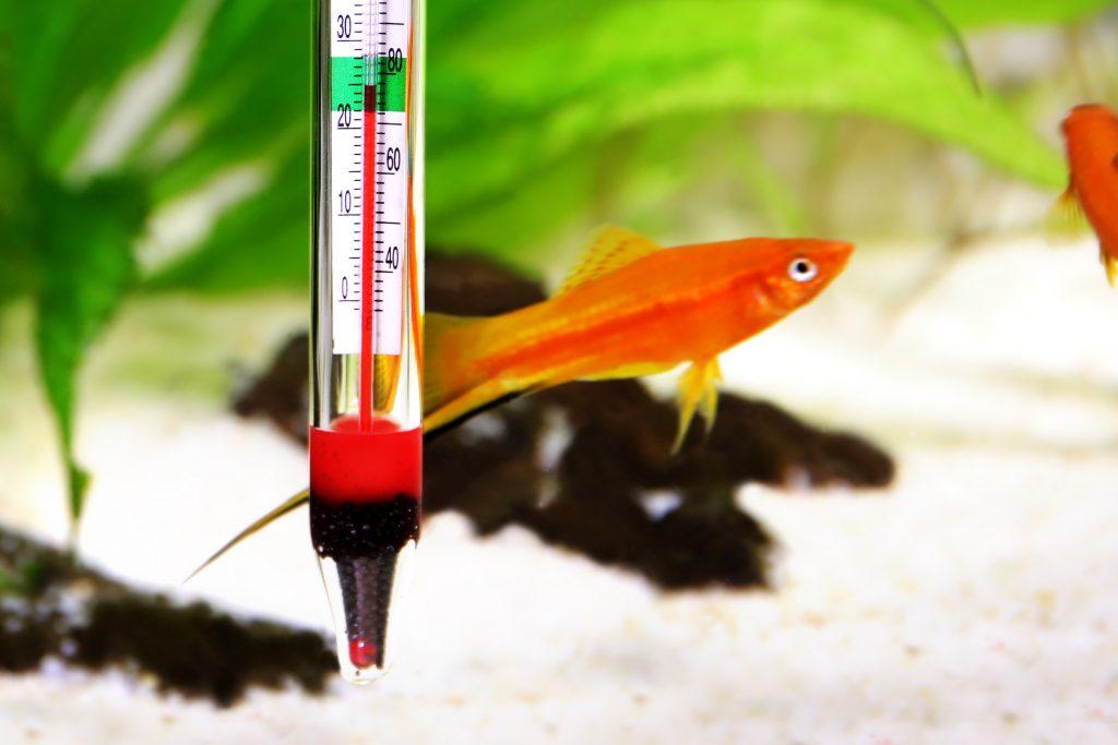 Termometr do akwarium