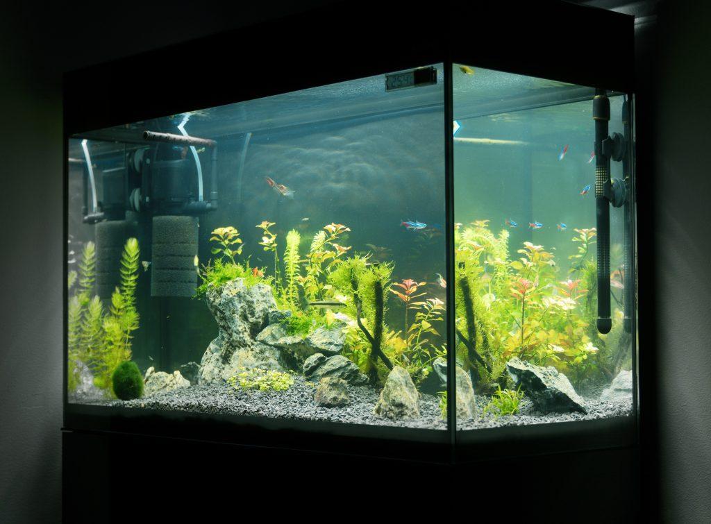 Oświetlenie do akwarium