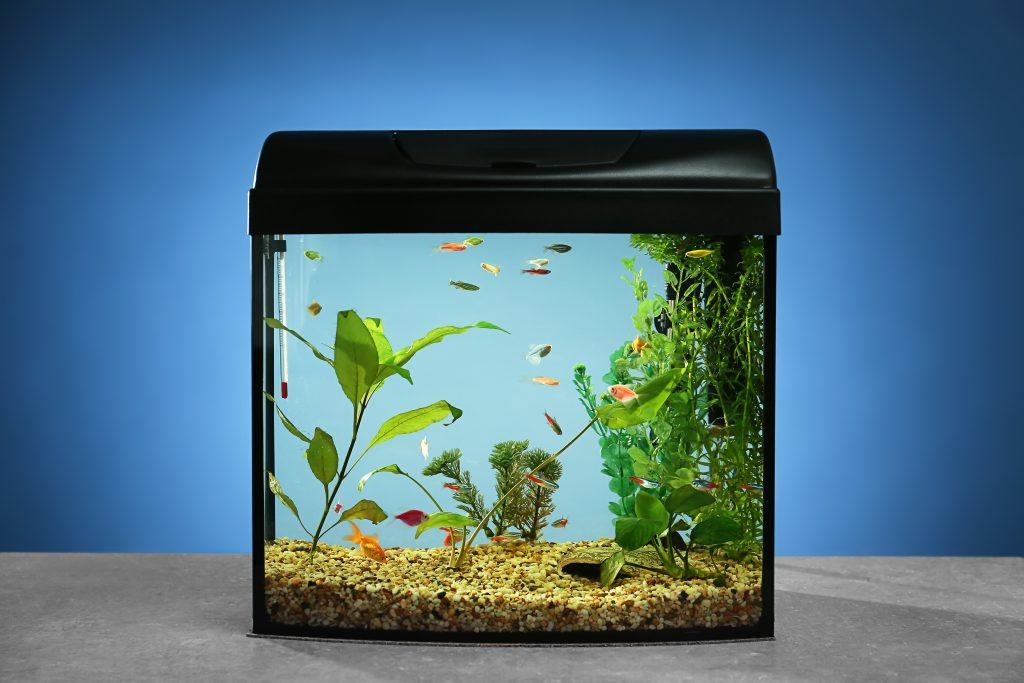 Żwirek do akwarium
