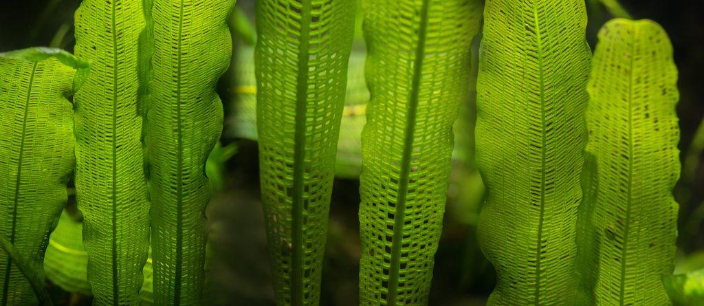 Rośliny do akwarium