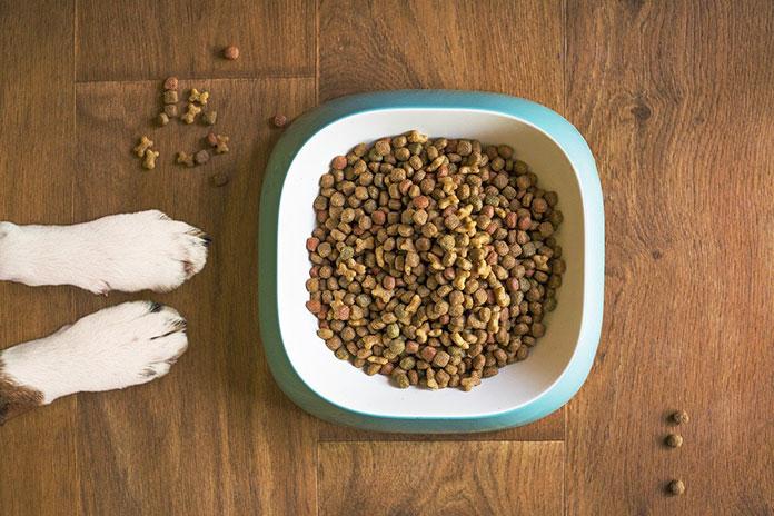 Jaka karma dla psa z nadwagą